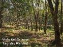 Viele Grüße zum Tag des Waldes!    Dieses Motiv finden Sie seit dem 29. September 2013 in der Kategorie Tag des Waldes (21.3.).