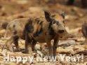 Happy New Year    Dieses Motiv findet sich seit dem 25. Dezember 2013 in der Kategorie Silvester & Neujahrskarten.
