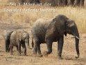 Am 3. März ist der Tag des Artenschutzes!    Dieses Kartenmotiv wurde am 29. September 2013 neu in die Kategorie Tag des Artenschutzes (3.3.) aufgenommen.