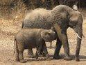 Aus der Kategorie South Luangwa Nationalpark in Sambia