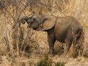 Dieses Motiv findet sich seit dem 30. April 2015 in der Kategorie South Luangwa Nationalpark in Sambia.