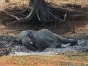 Dieses Motiv finden Sie seit dem 25. April 2015 in der Kategorie South Luangwa Nationalpark in Sambia.