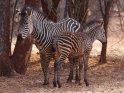 Dieses Kartenmotiv ist seit dem 28. Januar 2015 in der Kategorie Weitere Tiere in Sambia.