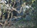 Leopard    Dieses Motiv ist am 27.05.2016 neu in die Kategorie Chobe Nationalpark aufgenommen worden.