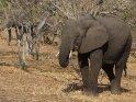 Aus der Kategorie Chobe Nationalpark