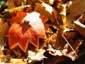 Dieses Motiv findet sich seit dem 31. Oktober 2013 in der Kategorie Herbstfotos.