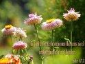 Er heilt, die zerbrochenen Herzens sind,  und verbindet ihre Wunden.  Psalm 147,3