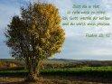 Bist du in Not,  so rufe mich zu Hilfe!  Ich, Gott, werde dir helfen  und du wirst mich preisen.  Psalm 50, 15
