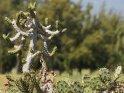 Dieses Kartenmotiv ist seit dem 31. Mai 2016 in der Kategorie Pflanzen und Bäume auf Gran Canaria.