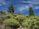 Dieses Kartenmotiv ist seit dem 30. Juni 2016 in der Kategorie In den Bergen von Gran Canaria.