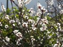 Aus der Kategorie Blumen & Blüten auf Gran Canaria