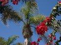 Dieses Motiv ist am 19.05.2017 neu in die Kategorie Blumen & Blüten auf Gran Canaria aufgenommen worden.