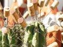 Dieses Motiv ist am 26.10.2016 neu in die Kategorie Sonstige Fotos von Gran Canaria aufgenommen worden.