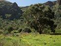 Dieses Motiv ist am 24.10.2016 neu in die Kategorie In den Bergen von Gran Canaria aufgenommen worden.