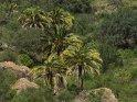 Palmen in der Caldera de Bandama    Dieses Motiv finden Sie seit dem 29. März 2017 in der Kategorie In den Bergen von Gran Canaria.