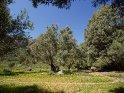 bäume in der Caldera de Bandama