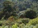 Dieses Motiv ist am 30.08.2016 neu in die Kategorie In den Bergen von Gran Canaria aufgenommen worden.