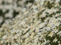 Dieses Motiv finden Sie seit dem 27. Februar 2015 in der Kategorie Blumen & Blüten auf Gran Canaria.