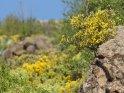 Dieses Kartenmotiv wurde am 31. August 2015 neu in die Kategorie Blumen & Blüten auf Gran Canaria aufgenommen.