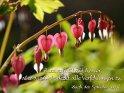 Hass ruft Streit hervor,  aber die Liebe deckt alle Verfehlungen zu.  Buch der Sprüche 10,12