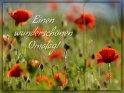 Einen wunderschönen Omatag!    (In Deutschland ist immer am 2. Sonntag im Oktober Omatag!)