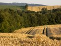 Blick über Getreidefelder