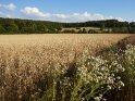 Getreidefeld im Süden Niedersachsens