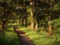 Von Bäumen gesäumter Weg