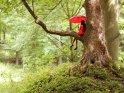 Mädchen sitzt im roten Kleid mit einem roten Regenschirm auf einem Baum.