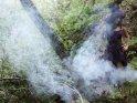 Eine Frau im Hexenkostüm steht in einem vernebelten Wald.