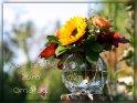 Liebe Grüße zum Omatag!    (In Deutschland ist immer am 2. Sonntag im Oktober Omatag!)