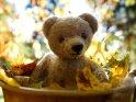 Herbstliches Foto von einem Teddybären, der in einer mit Blättern gefüllten Wanne sitzt.