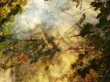 Die tief stehende Sonne fällt auf herbstliche Ahornblätter und beleuchtet den dazwischen aufsteigenden Nebel, so dass Sonnenstrahlen sichtbar werden.
