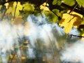 Ahornblätter im Herbst mit Nebel und Sonnenstrahlen