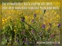 Ein freundlicher Blick erfreut das Herz,  eine gute Botschaft erquickt Mark und Bein.  Buch der Sprüche 15,30