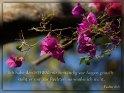 Ich habe den HERRN mir beständig vor Augen gestellt:  steht er mir zur Rechten, so wanke ich nicht.  Psalm 16,8
