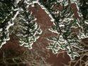 Schneebedeckte Tannenzweige, fotografiert von unten gegen den Nachthimmel
