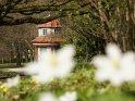 Schillerwiesen im Frühling mit Buschwindröschen im Vordergrund