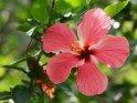 Aus der Kategorie Blumen und Blüten in Uganda