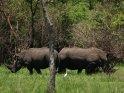 Nashörner    Aus der Kategorie Nashörner im Ziwa Rhino Sanctuary