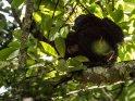 Schimpansin hat ihr Junges übers Knie gelegt und beschäftigt sich mit dem Lausen