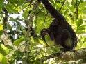 Junger Schimpanse sitzt auf seiner Mutter und schaut zum Betrachter herunter.