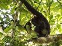 Schimpansen Mutter und Kind schauen sich gegenseitig an.