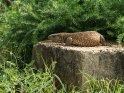 Waran    Dieses Motiv ist am 24.06.2017 neu in die Kategorie Murchison-Falls Nationalpark aufgenommen worden.