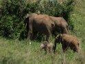 Dieses Motiv findet sich seit dem 26. Februar 2016 in der Kategorie Murchison-Falls Nationalpark.