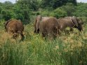 Aus der Kategorie Murchison-Falls Nationalpark