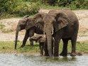 Elefanten mit einem Babyelefanten