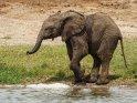 Kleines Elefantenbaby am Wasser