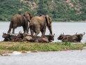 Elefanten und Büffel im Wasser