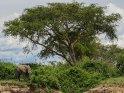 Elefant mit einem Großen Baum